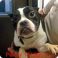 Adopt A Pet :: Penny - Greencastle, NC