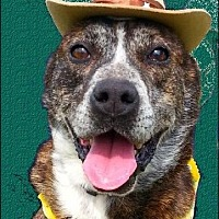 Terrier (Unknown Type, Medium) Mix Dog for adoption in Huntington, New York - Randy - N