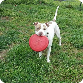 Pit Bull Terrier Mix Dog for adoption in Sanford, North Carolina - Fiona