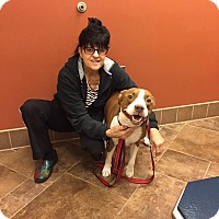 Adopt A Pet :: Nina - Burlington, NJ