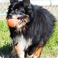 Adopt A Pet :: Sammie - Patterson, CA