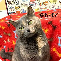 Adopt A Pet :: GRAY - Mooresville, NC