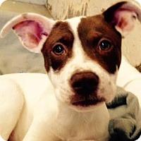 Adopt A Pet :: Butter - Austin, TX