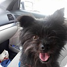 Adopt A Pet :: Mickey in Rocky Mt