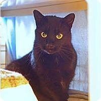 Adopt A Pet :: Patlacin - Victor, NY