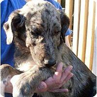 Adopt A Pet :: Twitter - Harrison, AR