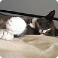Adopt A Pet :: Oscar M - Vancouver, BC