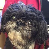 Adopt A Pet :: TATER - Hurricane, UT