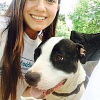 Adopt A Pet :: Arlo - Concord, CA