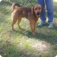 Adopt A Pet :: Arnie - Livingston, TX
