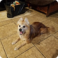 Adopt A Pet :: Chewie - conroe, TX