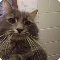 Adopt A Pet :: Seymour - Muscatine, IA