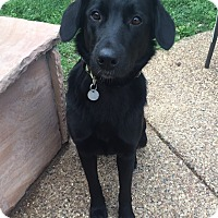 Adopt A Pet :: Shannon - Flower Mound, TX