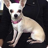 Adopt A Pet :: PETEY - West Branch, MI