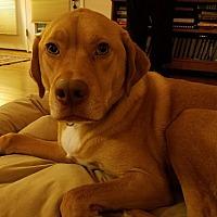 Adopt A Pet :: Riley - Buckeystown, MD