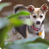 Adopt A Pet :: Sharona - Cedar Creek, TX