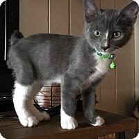 Adopt A Pet :: Donny - Cerritos, CA