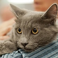 Adopt A Pet :: Ira - Great Falls, MT