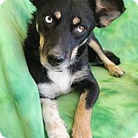 Adopt A Pet :: McKenzie - Wytheville, VA