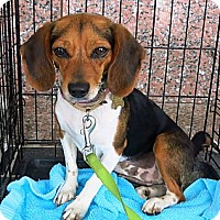 Adopt A Pet :: Roxie - Richmond, VA