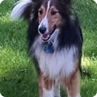 Adopt A Pet :: Gizmo (Available) - Pittsburgh, PA
