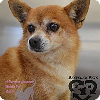Adopt A Pet :: Kringle - Sacramento, CA