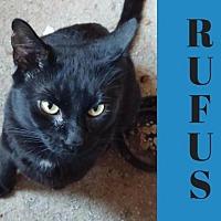 Adopt A Pet :: Rufus - Lansdowne, PA