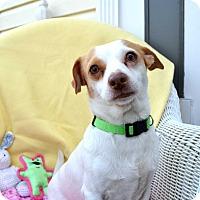 Adopt A Pet :: Hilda - Pittsburgh, PA