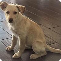 Adopt A Pet :: Buttercup - Livingston, TX