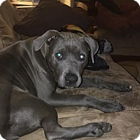 Adopt A Pet :: Lilah - Orange, CA