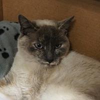 Adopt A Pet :: Frankie - Libby, MT
