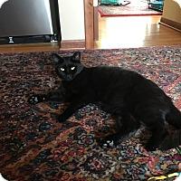 Adopt A Pet :: Aja - Columbus, OH
