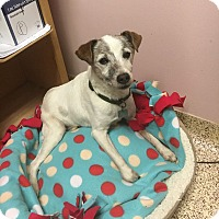 Adopt A Pet :: Tony - Indianapolis, IN