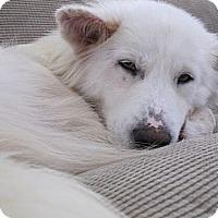Adopt A Pet :: Lidia - Alexandria, VA