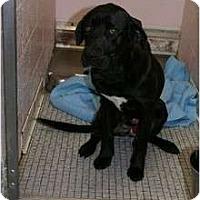 Adopt A Pet :: Gunnar - Washington, NC