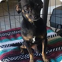 Adopt A Pet :: Chips - Rosamond, CA
