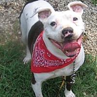 Adopt A Pet :: Louie- Courtesy Listing - Fredericksburg, VA