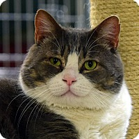 Adopt A Pet :: Gabe - Norwalk, CT
