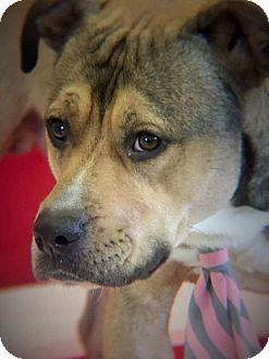 Shepherd (Unknown Type)/Terrier (Unknown Type, Medium) Mix Dog for adoption in Flint, Michigan - Rascal
