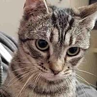 Adopt A Pet :: VERA - Rogers, AR