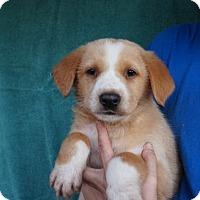 Adopt A Pet :: Flip - Oviedo, FL