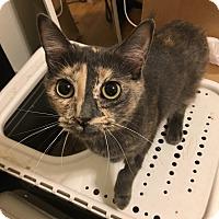 Adopt A Pet :: Buttons - New Braunfels, TX