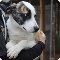Adopt A Pet :: Meena - Columbia, TN
