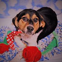 Adopt A Pet :: Astro - Waupaca, WI