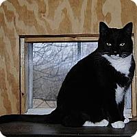 Adopt A Pet :: Miss Kitty - Sanford, ME