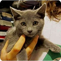 Adopt A Pet :: Misty - Colmar, PA