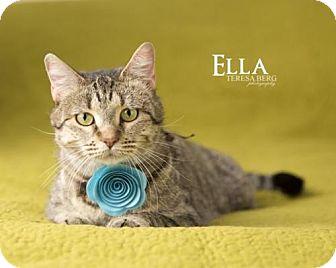 Domestic Shorthair Cat for adoption in Dallas, Texas - Ella