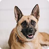 Adopt A Pet :: Sheena - Portland, OR