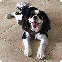 Adopt A Pet :: Fiona - Boca Raton, FL