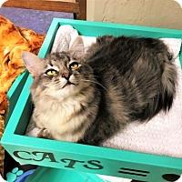 Adopt A Pet :: Alex - Tempe, AZ